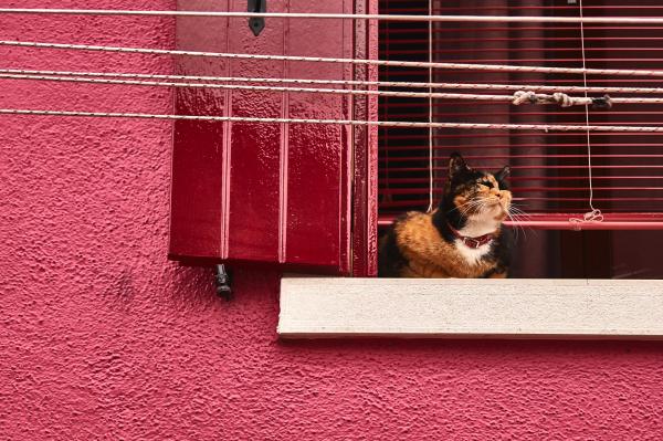 Katze chillt am Fenster in Burano in Italien